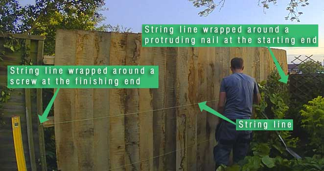 picture showing most of the feather edge board installed with the string line pulled tight along the fence